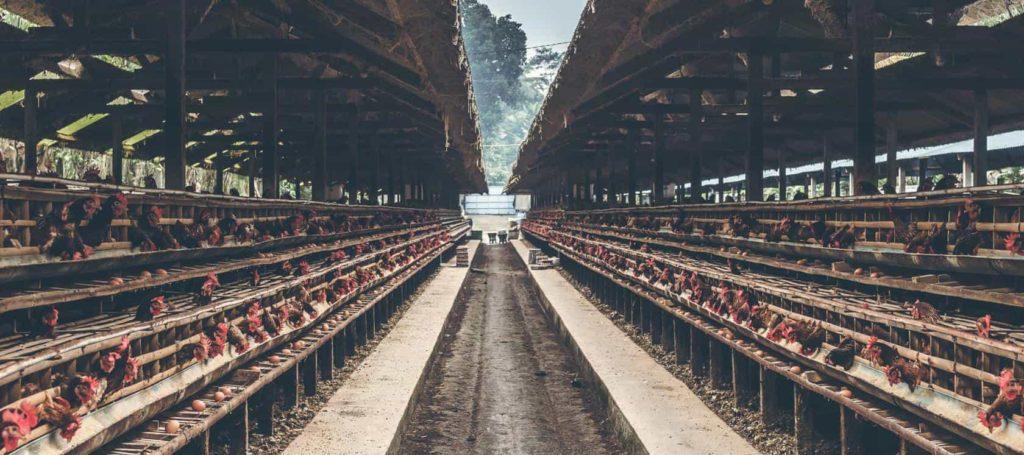 Animal-Welfare-2