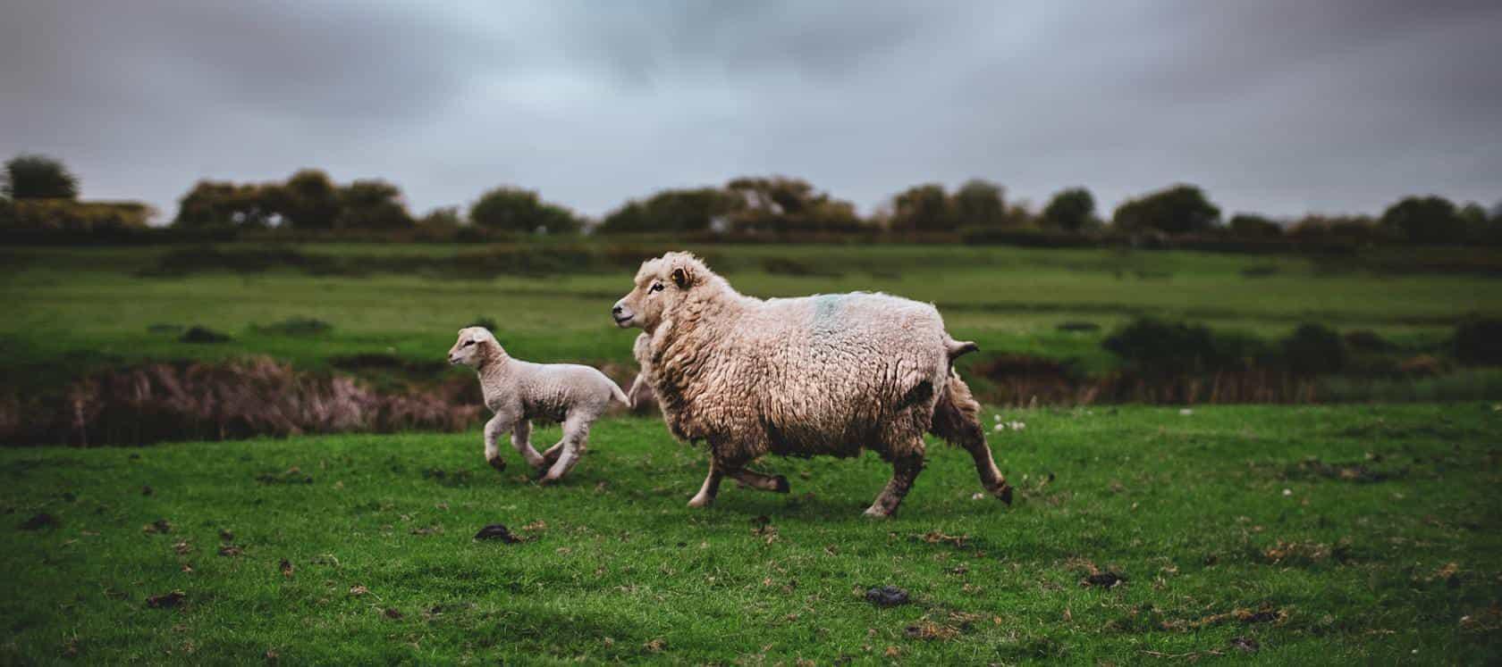 Animal-Welfare-9