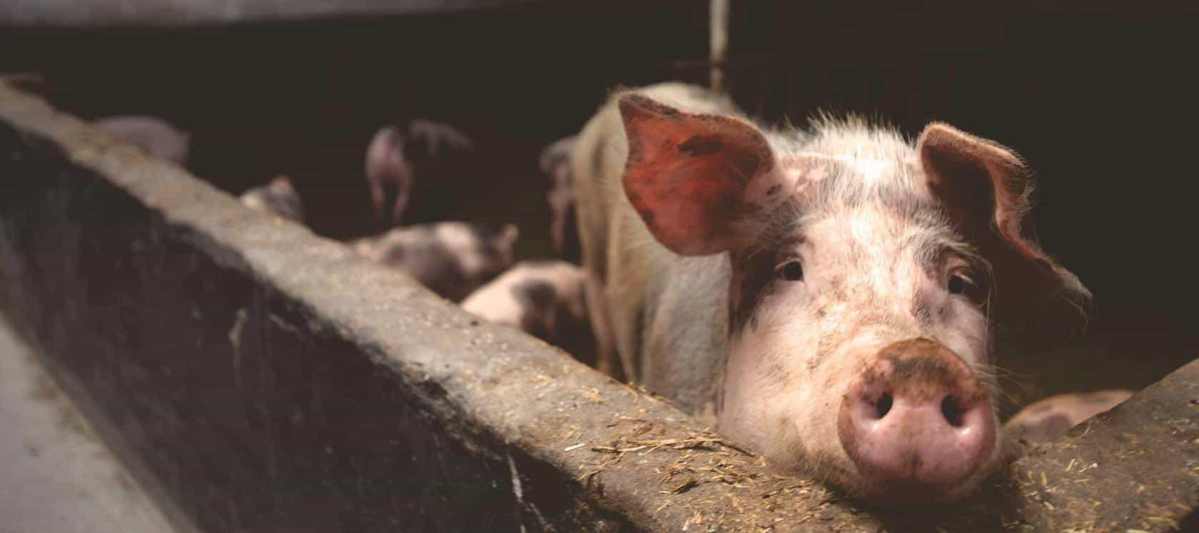 Animal-Welfare-11