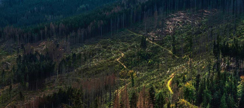 Deforestation-3