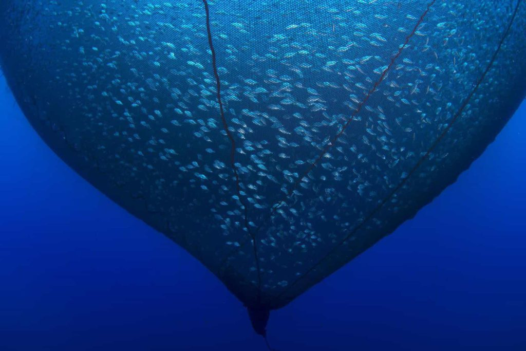 Giant underwater net catching hundreds of fish.