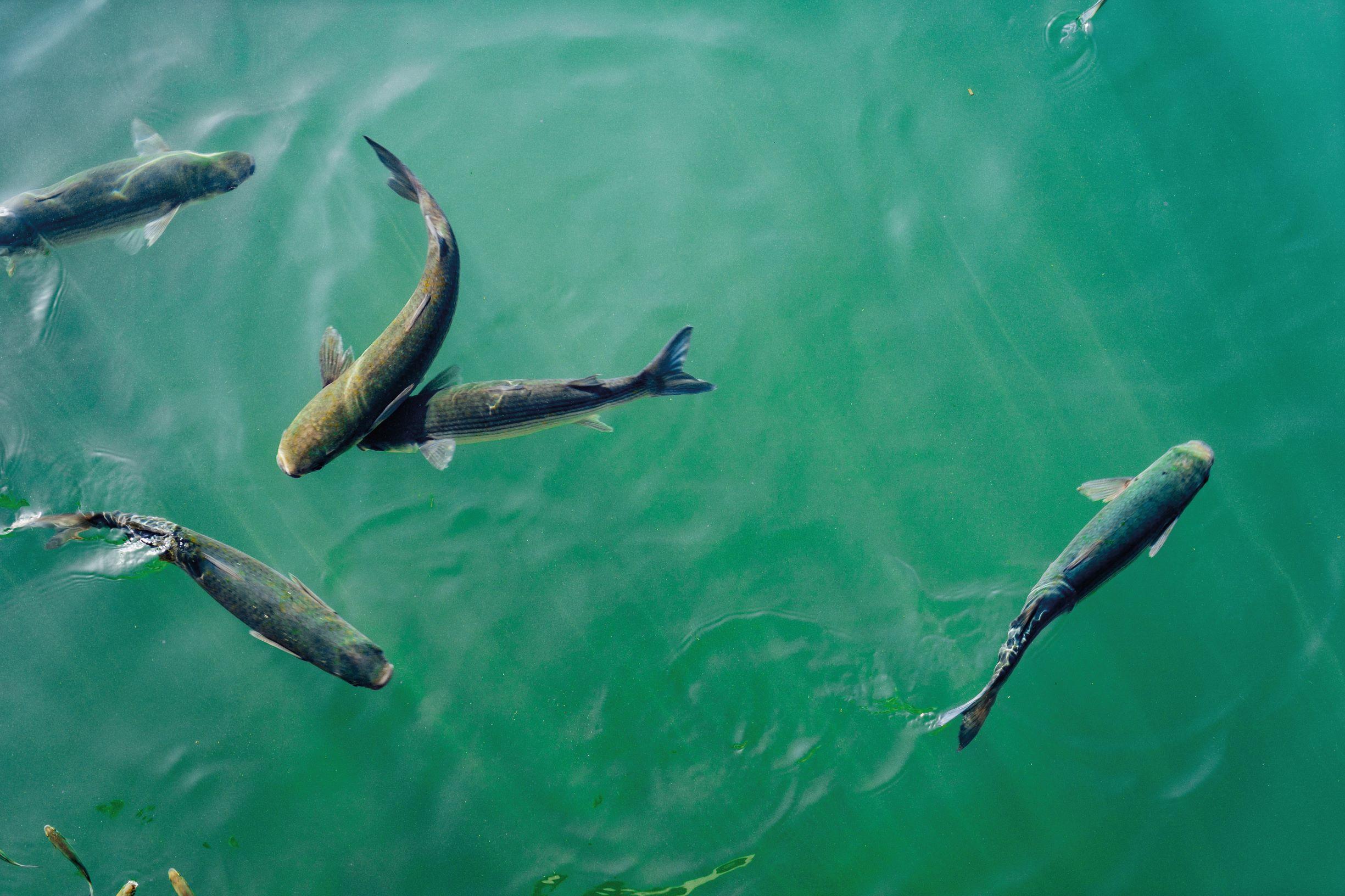 aquaculture-2