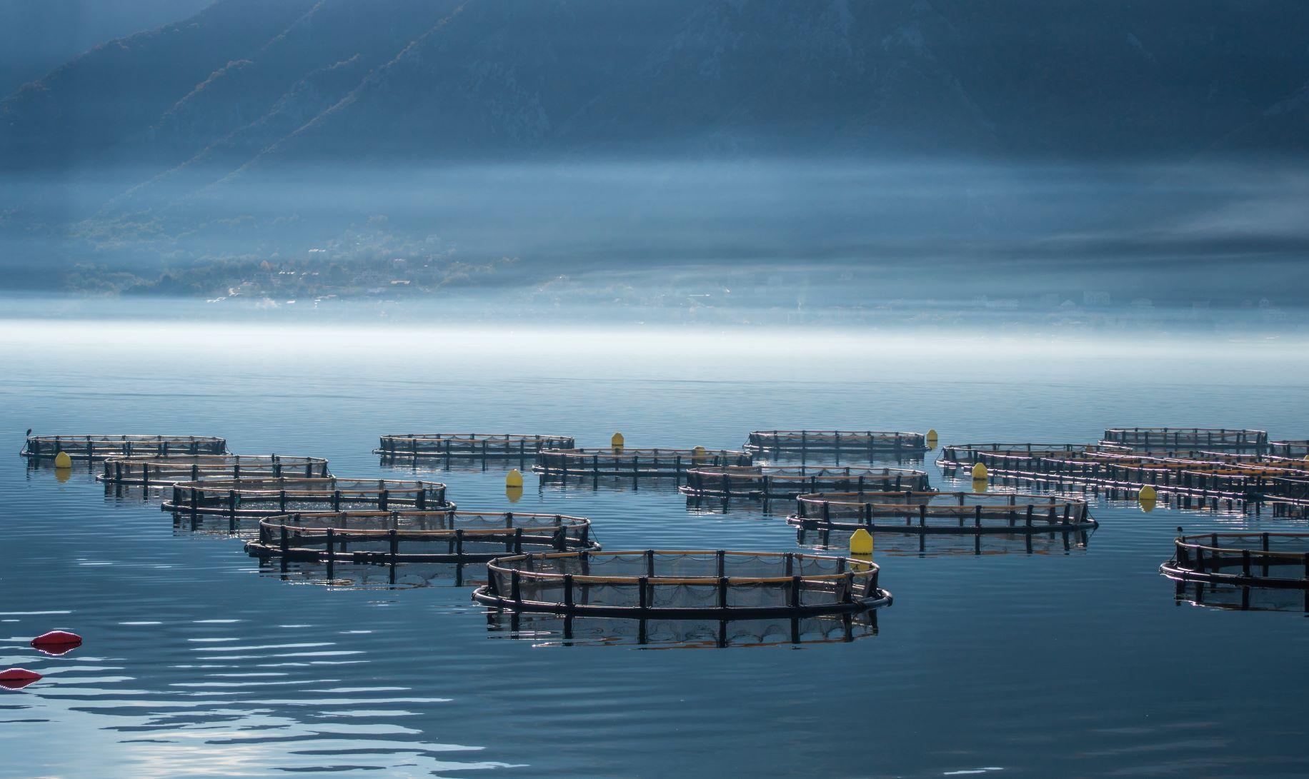 Aquaculture-3