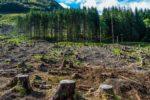 Deforestation (8)